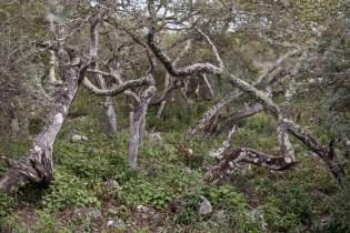galapagos-san-cristobal-77