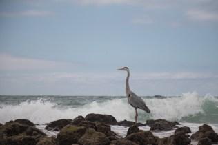 galapagos_isabela_beach-8