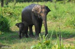 Jour4-elephant-bebe