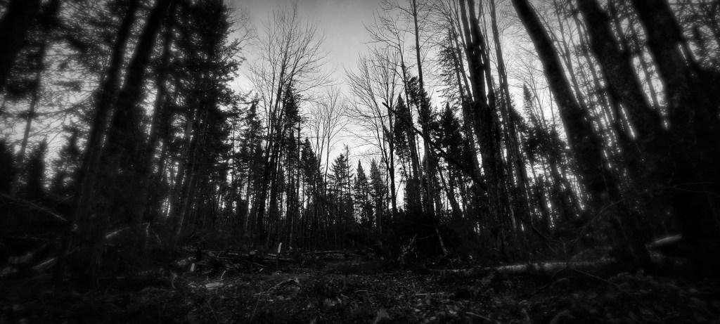 rdv blogueurs n&b entre cime racines forêt
