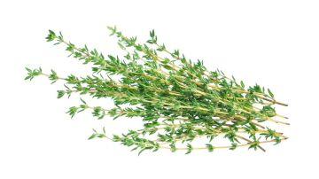 Phytotherapie-Herboristerie-Sante-Naturelle-Thym