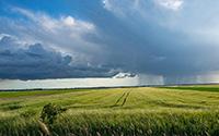 Seguro de colheitas ( Proteção das culturas face aos fenómenos climáticos adversos)