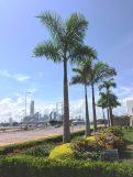 Cartagena -view of modern Bocagrande