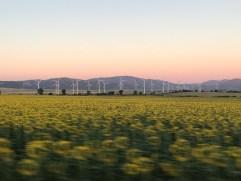 Windmills around Tarifa