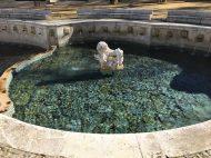Pristine waters at the Fuente del Rey
