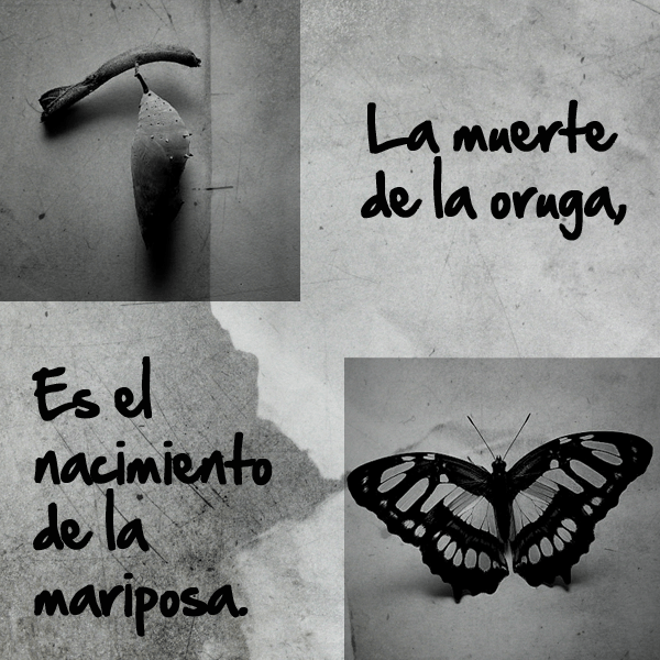 muerte oruga nacimiento mariposa