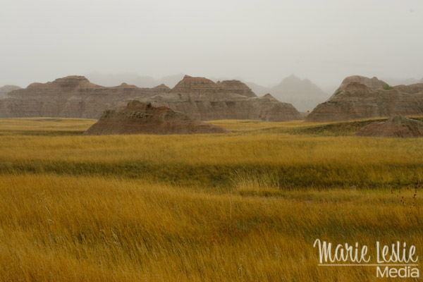 meadows at badlands national park