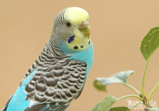 Pet Bird Portraits--Techniques for Better Pet Photography