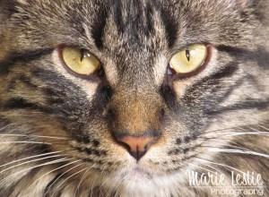 professional cat portrait
