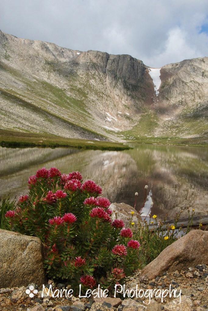 Summer Flowers at Summit Lake