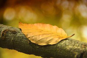 blad-herfst-seizoen