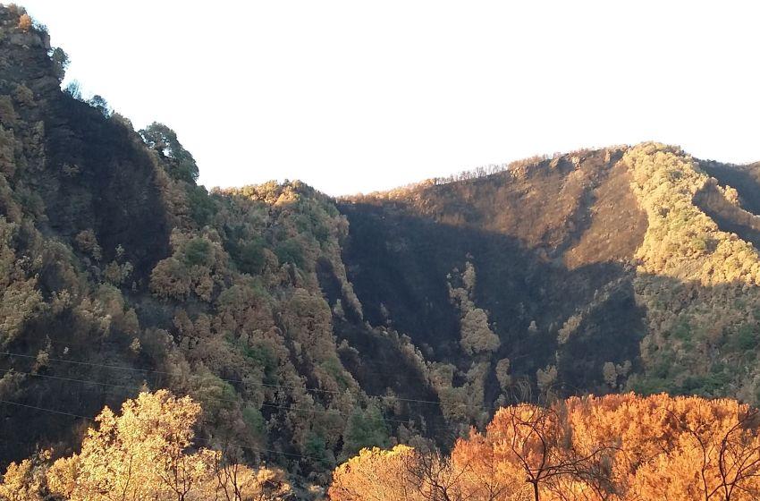 """""""Stiamo prendendo fuoco.. è stato tuo figlio"""". Incastrato dai parenti l'uomo accusato di aver distrutto diecimila metri di pineta vesuviana."""