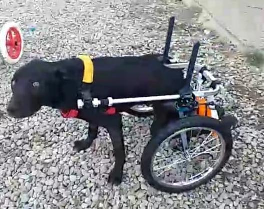 Lieto fine per il cane investito dal treno: Giacomino sta meglio ed è stato adottato.