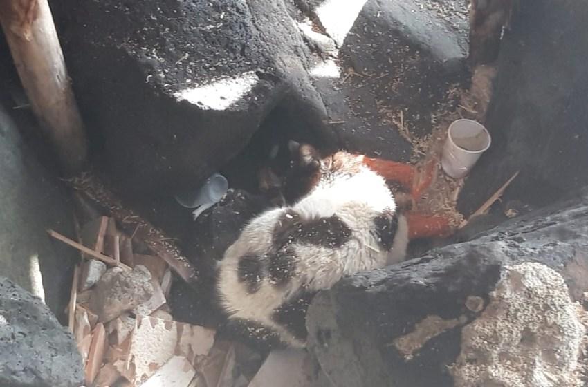 Gatto intrappolato tra gli scogli salvato dai volontari delle guardie ambientali (Video)