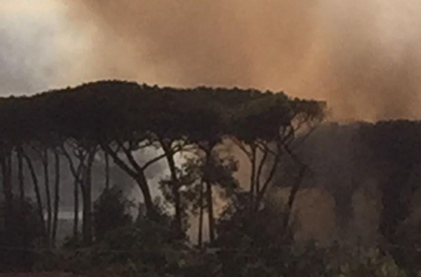 Incendio in pineta, il fuoco lambisce l'autostrada e un centro abitato (Video)