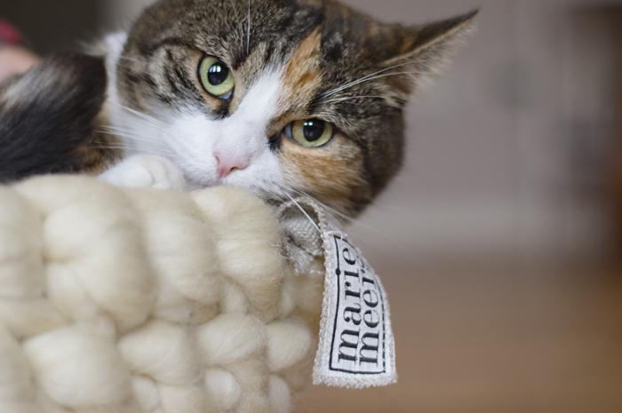 mariemeers Katze Karlii Mood