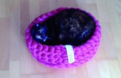 Cat basket makes Tiro happy