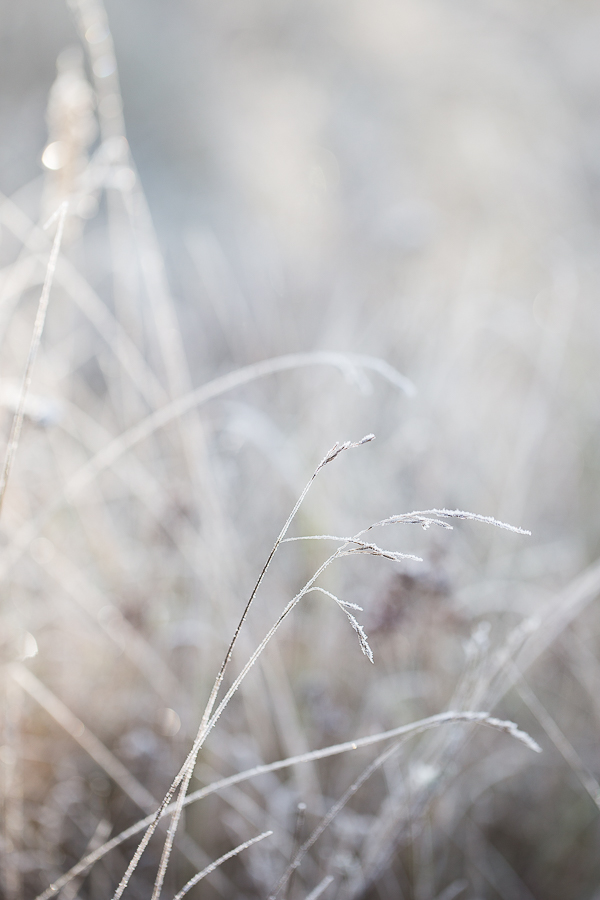 frost gras marieola