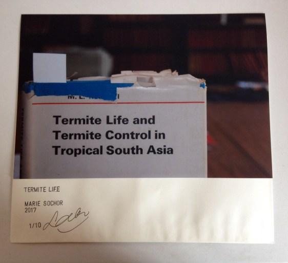 Termite Life