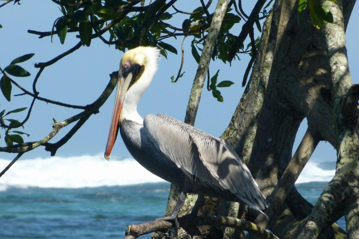 Bocas del Toro – Isla Bastimientos