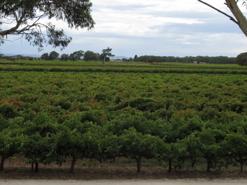 Blick vom Restaurant der Sea Breeze Winery