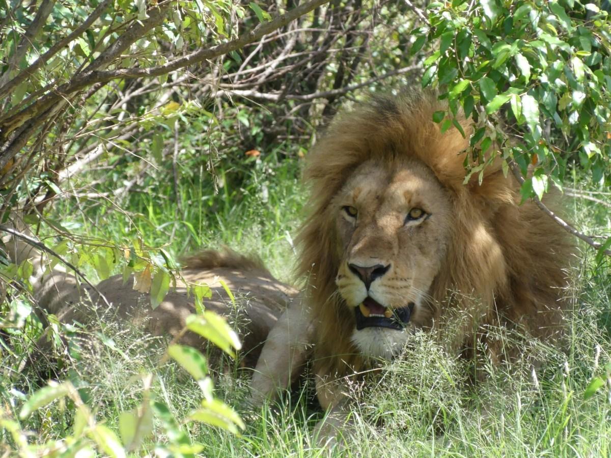 Weekend im Masai Mara National Reserve