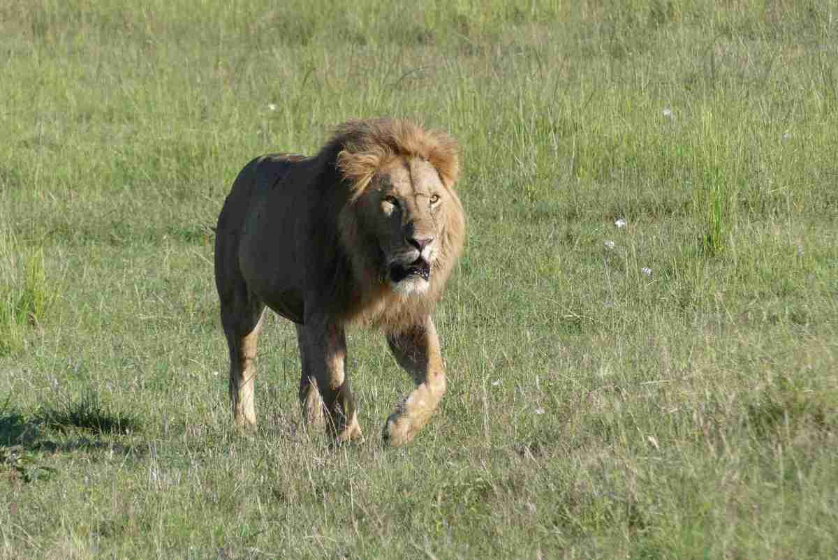 Masai Mara Reserve – Day 3