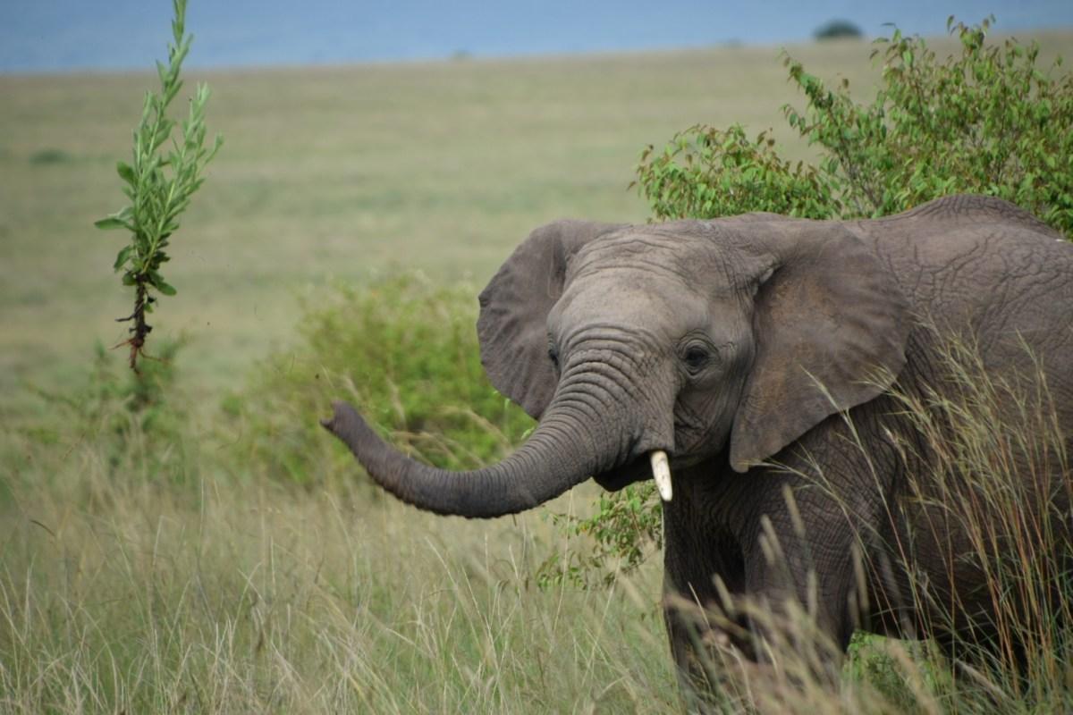 Masai Mara Reserve – Day 2