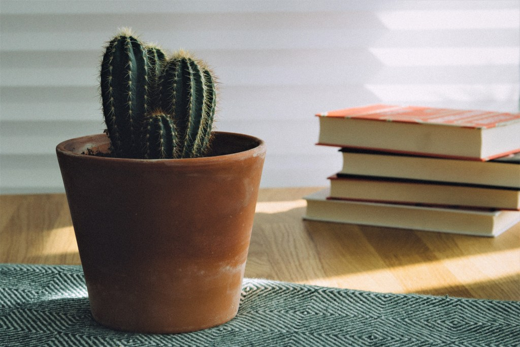table with books and plant