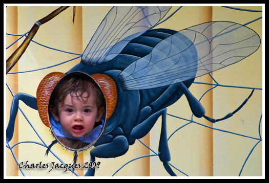 la mouche françois