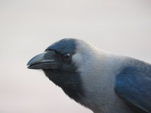 a close up of a bird that was about 20 feet away