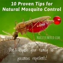 Marifer's Natural Mosquito Control Strategy