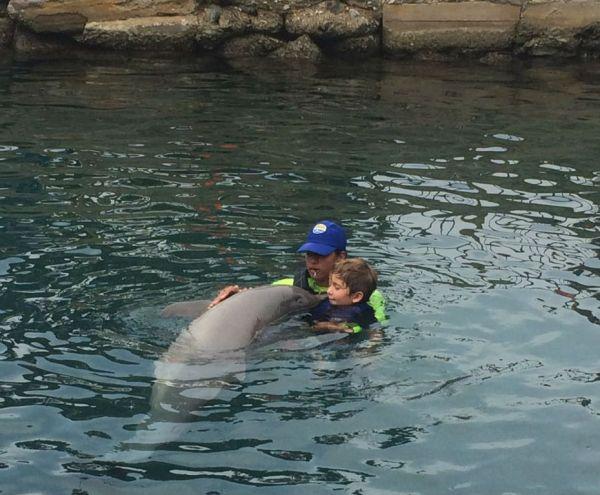 Acuario Rodadero Encuentro Delfines