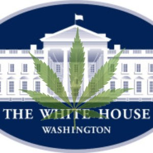 A wasted legacy--Obama, Holder and Marijuana