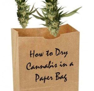 How to Dry Cannabis in a Paper Bag – Is it a Legit Technique?