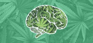 Study: Certain Cannabis Strains May Support Brain Cell Health