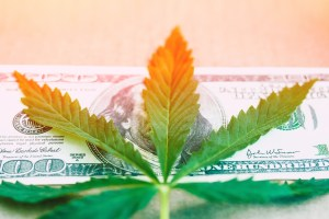 The Top 3 Marijuana Stocks to Buy in 2021