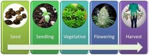 Tutorial: How to Grow Cannabis Indoors!