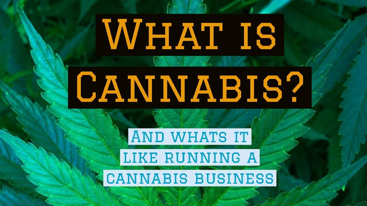 What is Cannabis and How to Run a Cannabis Business - Marijuana & Business