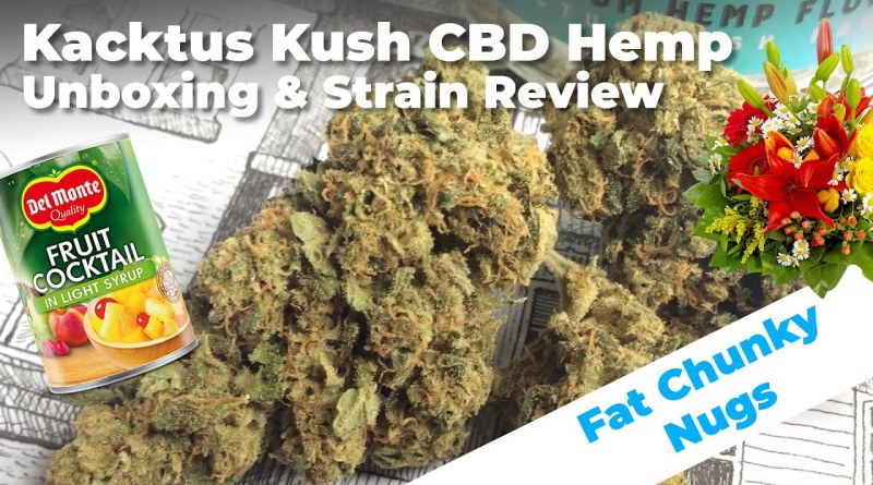 Kactus Kush Unboxing and CBD Hemp Strain Review | Conscious Clouds Episode #7