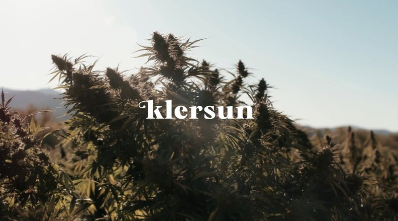 Klersun Hemp Extracts: The Hemp Plant Potential