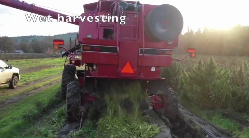 Need an efficient way to harvest large acreage? | USA Hemp Combine Harvester – 2020
