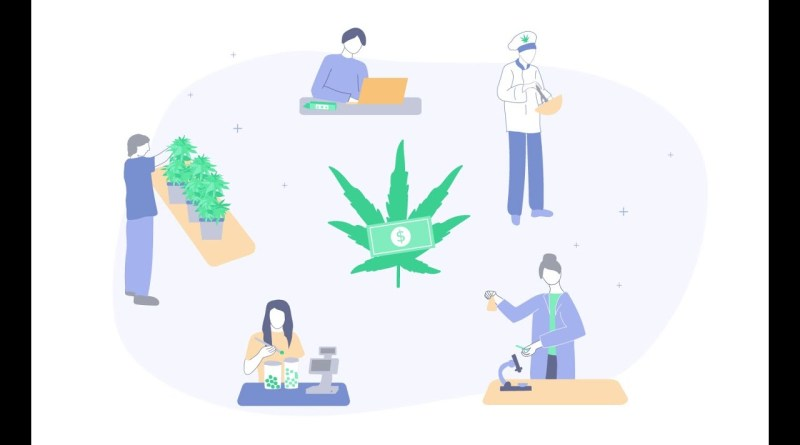 The Best Marijuana Jobs & Salaries