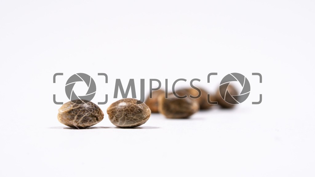Seeds 10000482 download
