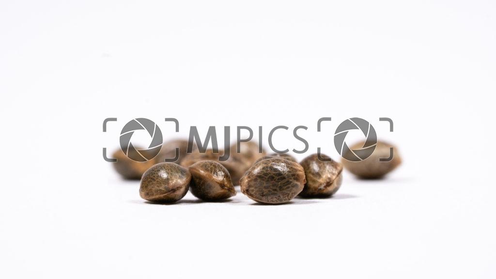 Seeds 10000486 download