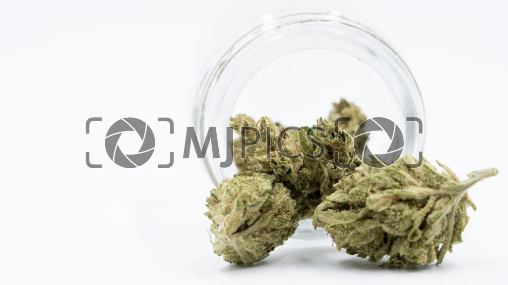 CBD White Widow Autoflower 10000672 download