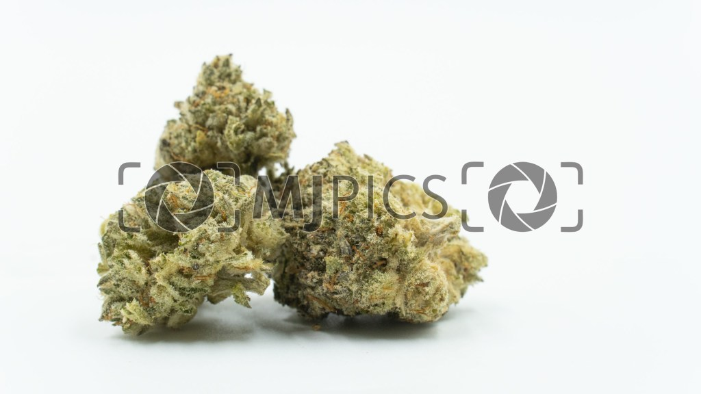 Jack Herer x Skunk 10000817 download