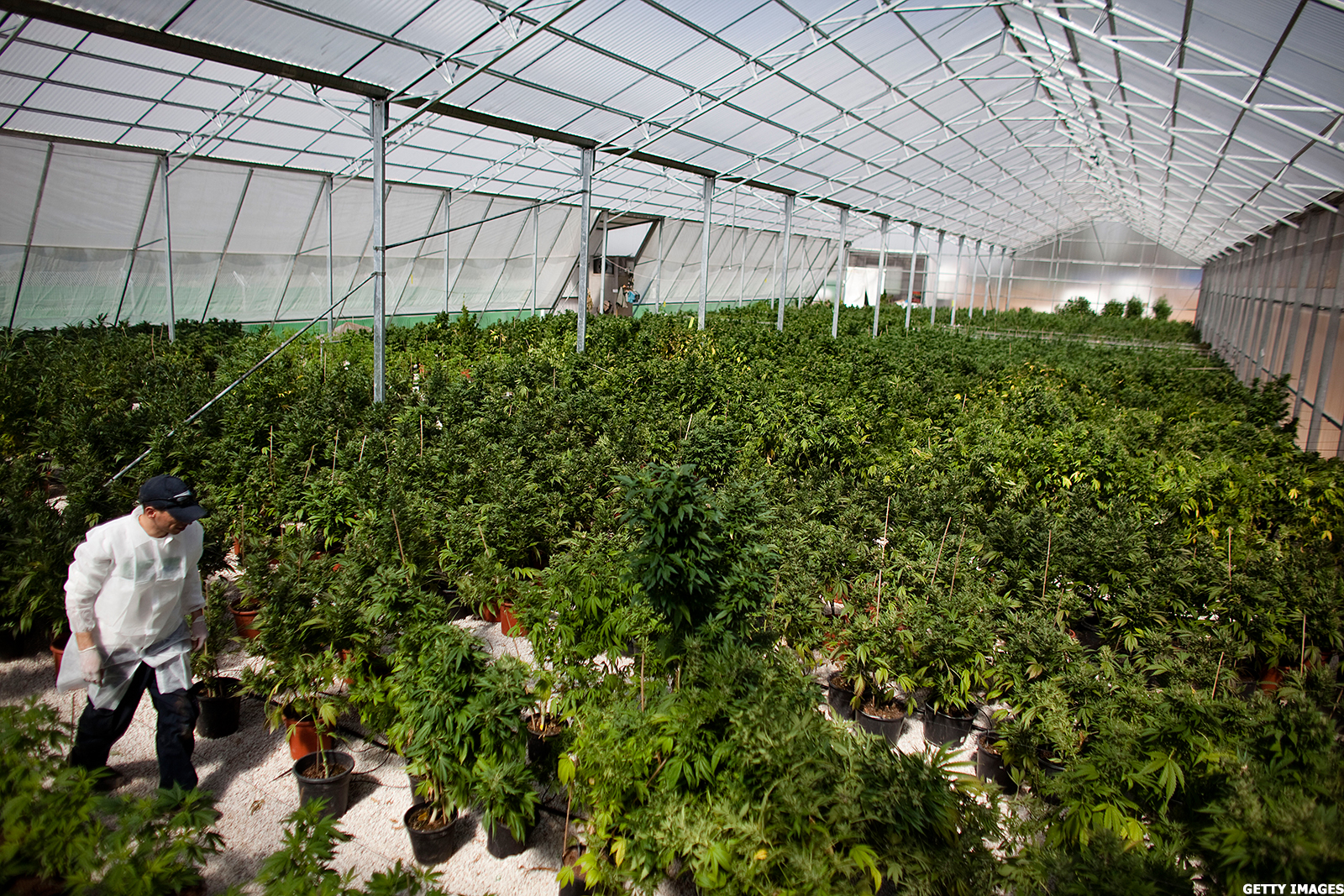 Recreational Cannabis Measure Likely Headed To Michigan