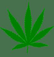 Marijuana Smokers Sativa Leaf