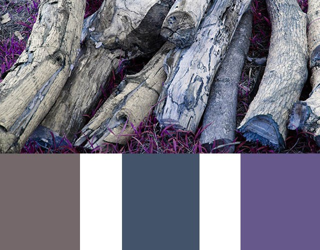 Color Inspiration: Deep purple and Blue Green